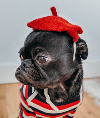 black dog dressed in a red french outfit looking to the side