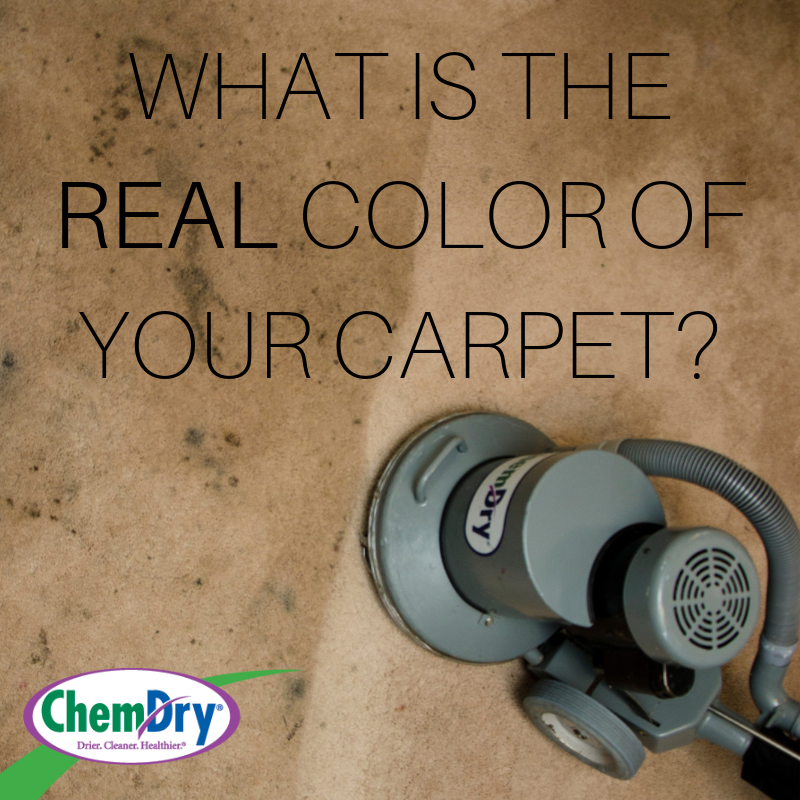 what is the real color of your carpet chemdry graphic